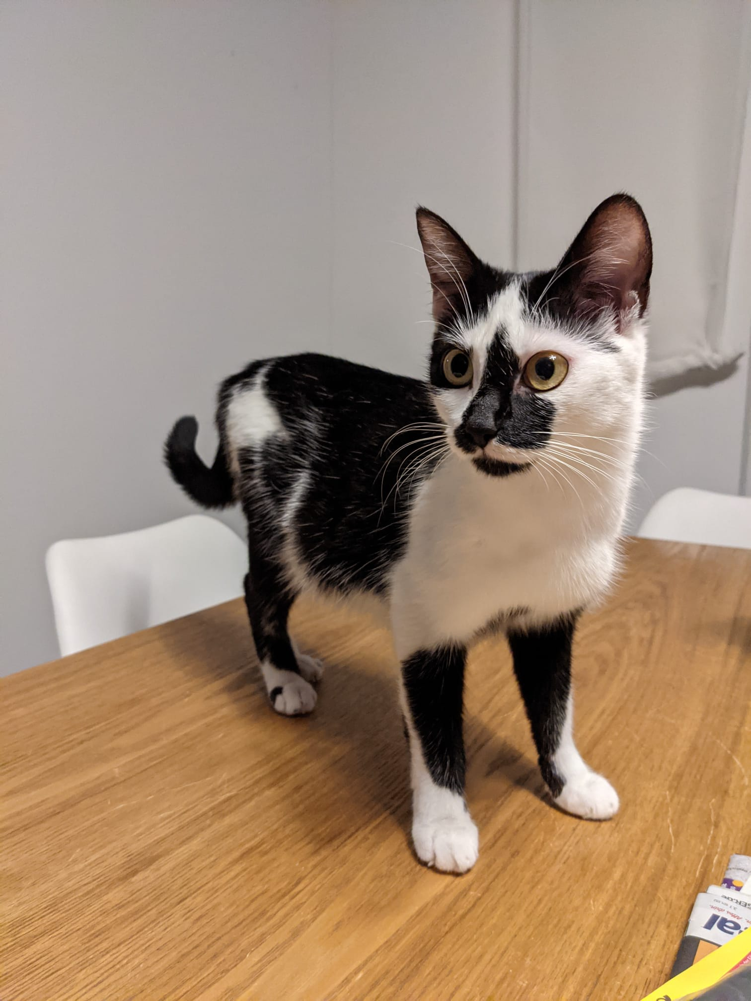 Yuki (1 Jahr)