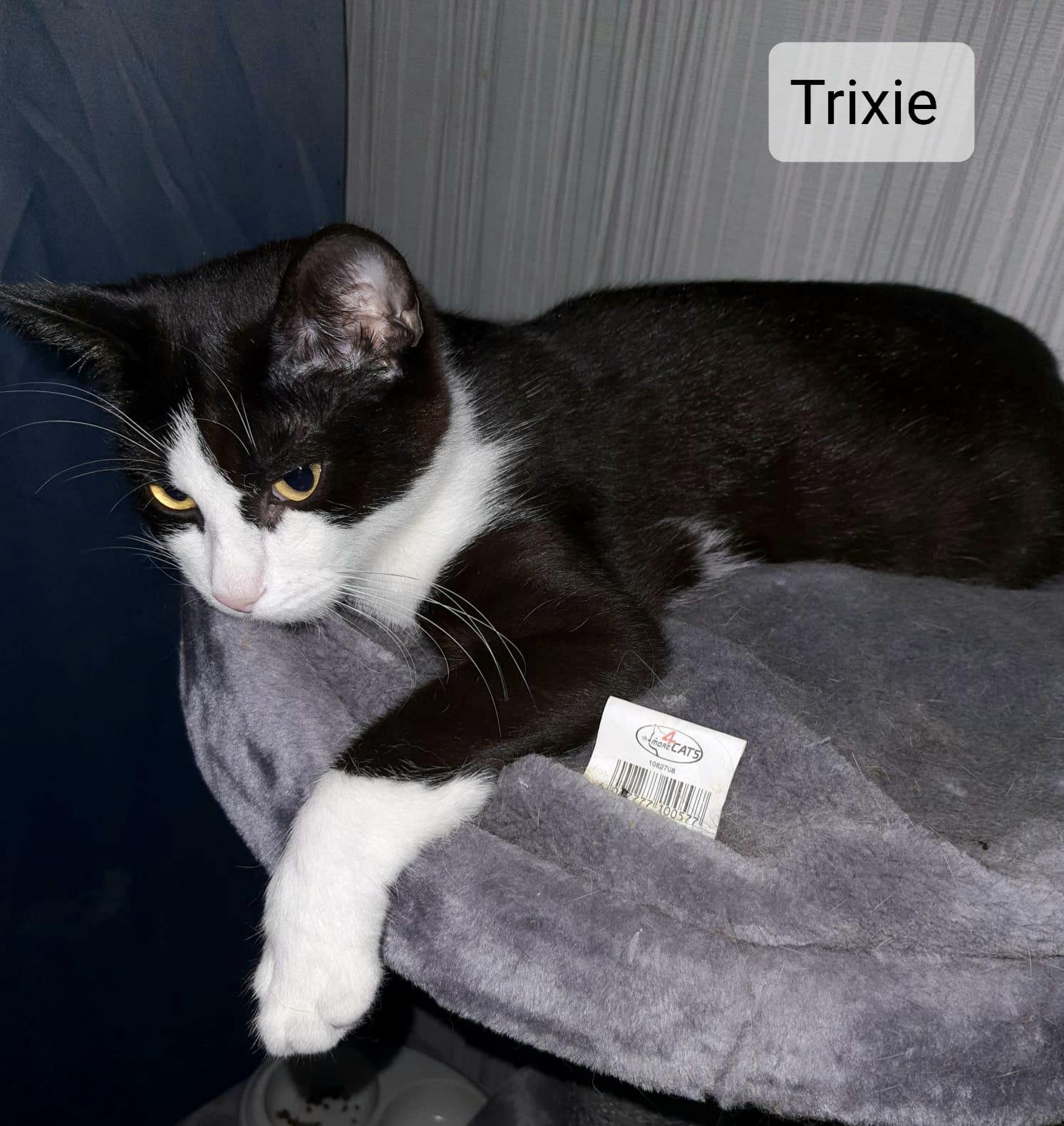 Trixie (2 jahre)