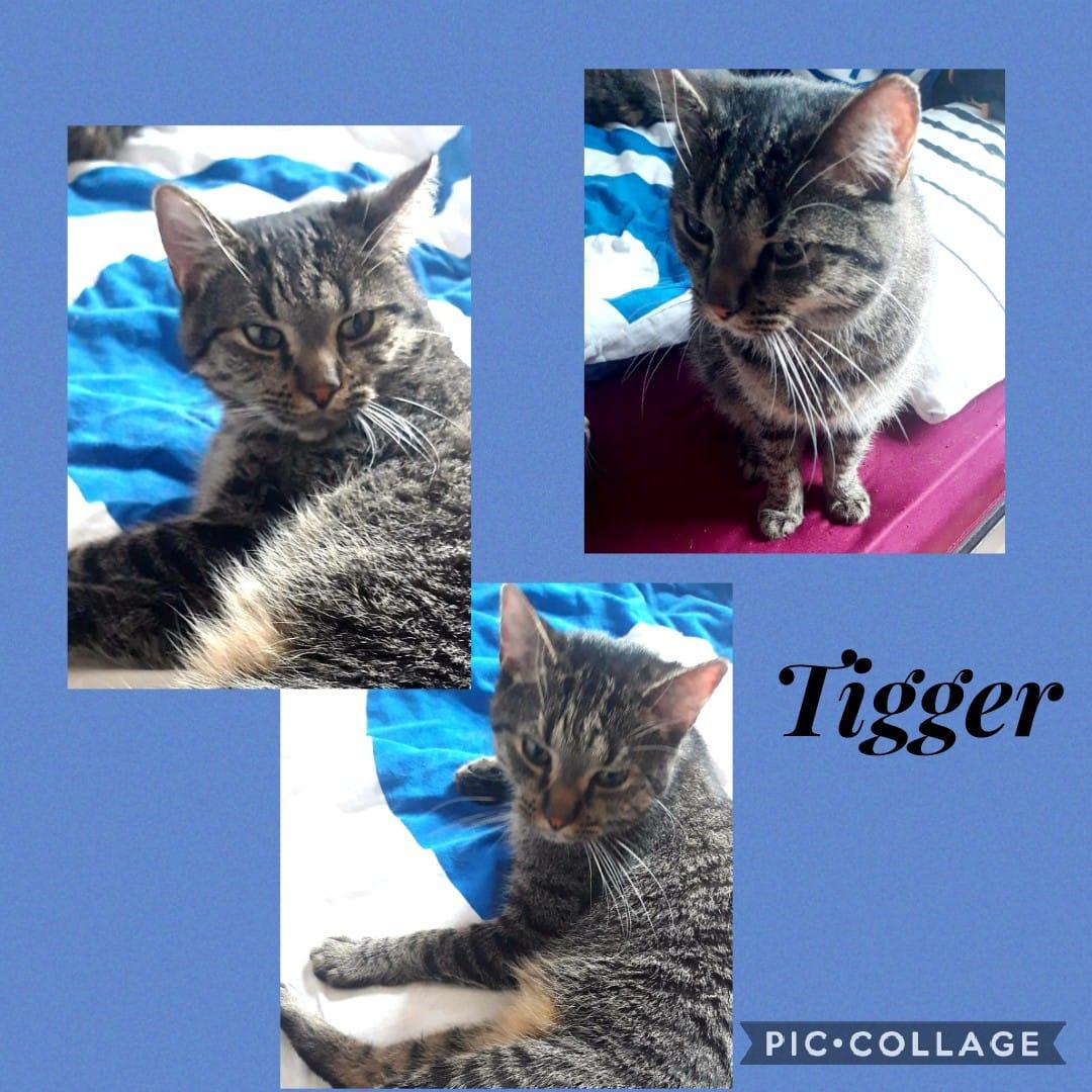 Tigger (2Jahre)